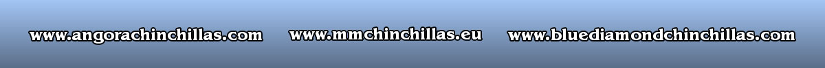 www.angorachinchillas.com - www.mmchinchillas.eu - www.bluediamondchinchillas.com